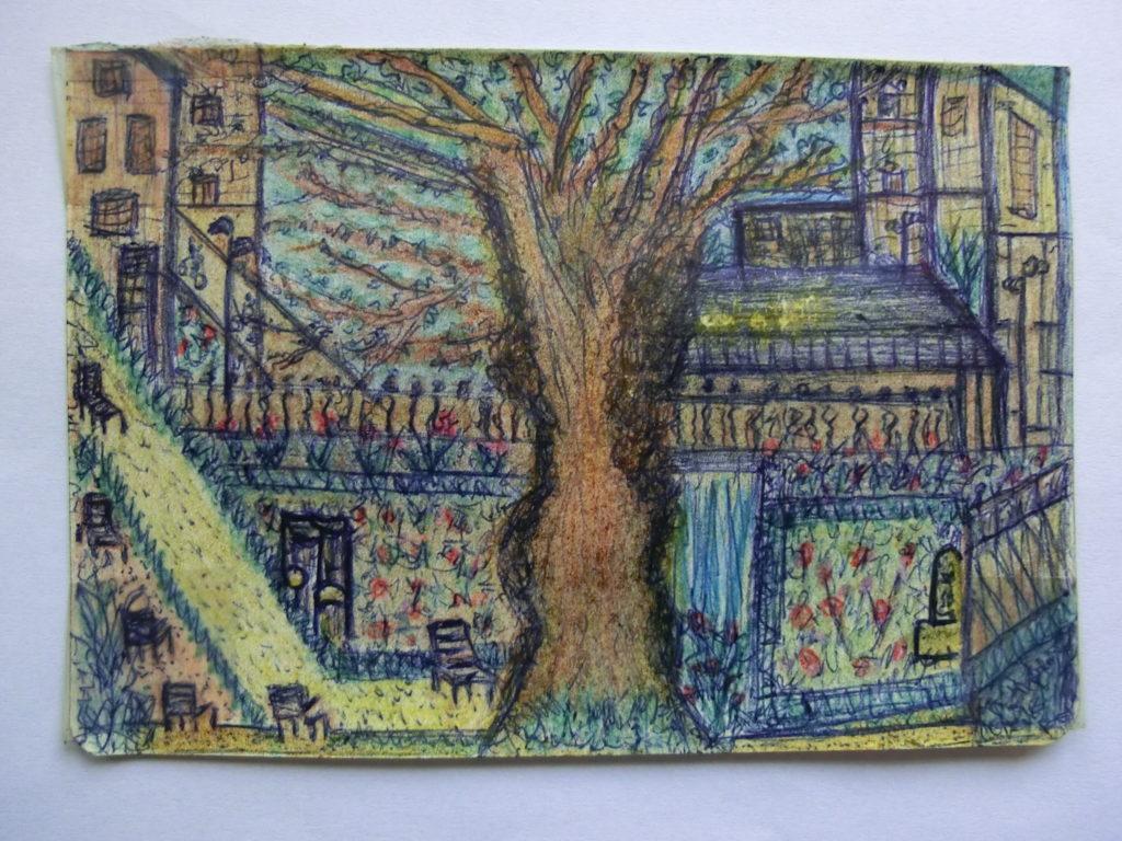 tekening vleugelnootboom in tuin Rijksmuseum door Didy van de Veer