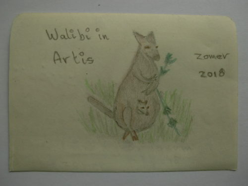 wallaby in Artis
